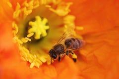 Beautiful, Flowers, Bee Stock Image