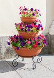 Beautiful flowers in big flowerpot in sunny day Royalty Free Stock Image