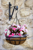 Beautiful flowers in the big pot on the wall Stock Photo