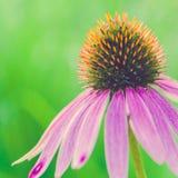Beautiful, Flowers, Bloom Royalty Free Stock Photo