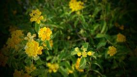 Beautiful, Flowers, Bloom stock photos