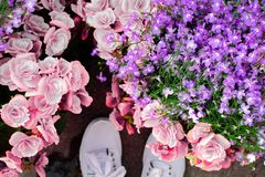 Beautiful, Flowers, Bloom Stock Images