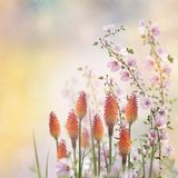 Beautiful Flowers in the Garden. Beautiful Flowers Bloom in the Garden Royalty Free Stock Images