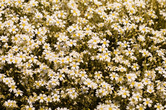 Beautiful flowers blooming  in the garden at sunny summer or spr Stock Photos