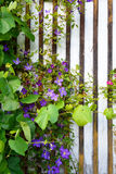 Beautiful flowers blooming and growing Royalty Free Stock Photos