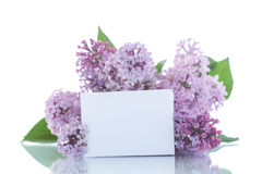 Beautiful flowers blooming lilac Royalty Free Stock Photo