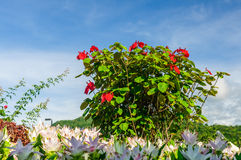 Beautiful flowers blossoming Royalty Free Stock Image