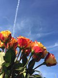 Beautiful Flowers. Blue Sky Contrails Royalty Free Stock Images