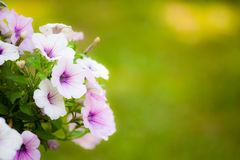 Beautiful flowers with blur green background Stock Photos