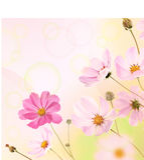 Beautiful Flowers Border Royalty Free Stock Photos
