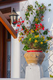 Beautiful flowers and bougainvillea in a pot near the entrance t Royalty Free Stock Images