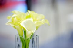 Beautiful flowers bouquet Stock Photography