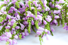 Beautiful flowers - a bouquet of speedwell. The  summer  bouquet Royalty Free Stock Image