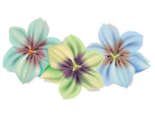 Beautiful flowers bouquet. Vector Summer flowers isolated on white background. Flowers for floral design. Lilies in. Different colour Stock Photos
