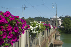 Beautiful flowers on the bridge over Po river in Turin Royalty Free Stock Photos