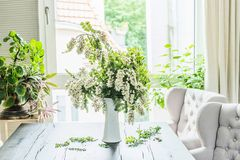 Beautiful flowers bunch with blossom acacia branches in white vase on table in living room at window. Interior design and ideas. Still life stock photography