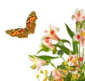 Beautiful flowers and butterfly in garden close up. Beautiful flowers and butterfly in garden closeup stock illustration