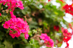 Beautiful flowers in city park Royalty Free Stock Photos