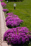 Beautiful flowers  on city park Royalty Free Stock Image