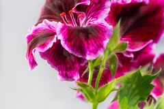 Beautiful flowers close up photo Stock Images