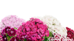 Beautiful flowers Royalty Free Stock Images