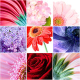 Beautiful flowers collage Royalty Free Stock Photo