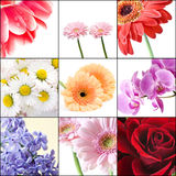Beautiful flowers collage Stock Photos
