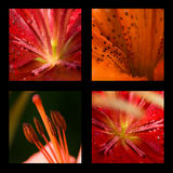 Beautiful flowers collage Stock Images