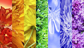 Beautiful flowers collage Stock Photography