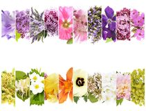 Beautiful flowers collage Royalty Free Stock Image