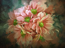 Beautiful flowers,color blooming,illustration Stock Photo