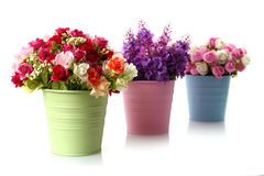 Beautiful flowers and colorful floral disc Stock Images