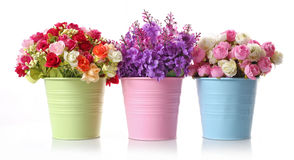 Beautiful flowers and colorful floral disc Stock Image