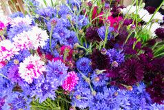 Beautiful flowers of cornflowers in a huge bouquet royalty free stock photos