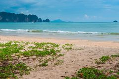 Beautiful flowers crawling along the sandy beach. At the resort of Thailand Royalty Free Stock Image