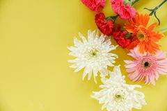 Beautiful flowers decorate on yellow background top view / Colorful flower various types stock photography