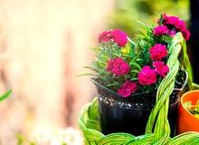 Beautiful flowers in basket Royalty Free Stock Image