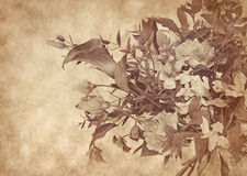 Beautiful flowers design in grunge and retro Stock Images