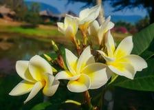 Beautiful flowers. Stock Photos