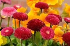 Beautiful Flowers Stock Image