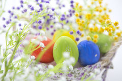 Beautiful flowers and easter eggs basket. Royalty Free Stock Images