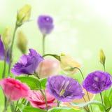 Beautiful flowers eustoma. Stock Photography
