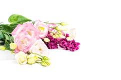 Beautiful flowers eustoma in studio Stock Photography