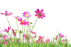 Beautiful flowers field Stock Photo