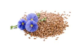 Beautiful flowers of flax with seeds Royalty Free Stock Photography