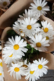 Beautiful flowers in flower shop Stock Image