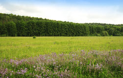 Beautiful flowers forest and sky in nature Stock Photo