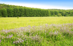 Beautiful flowers forest and sky in nature Stock Image