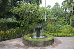 Orchid garden Singapore Botanic Garden. Beautiful flowers and fountain in Orchid garden Singapore Botanic Garden stock photos
