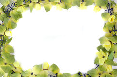 Beautiful flowers frame royalty free stock images